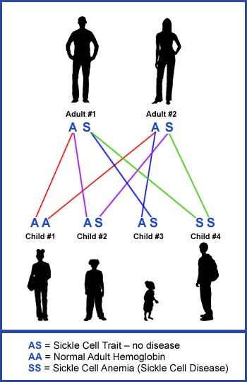 Urie Bronfenbrenner And Child Development