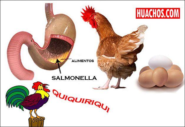 Manipular huevos crudos se considera una actividad inocua, sin embargo en las plumas, pico o patas, o en cualquier parte del huevo puede venir la temible Salmonella.