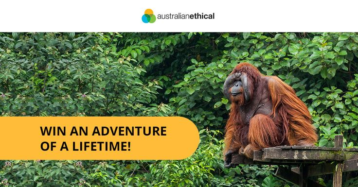 Win flights + accomodation and a spot on the Borneo Orangutan Expedition by entering Australian Ethical's latest competition. Enter online today!