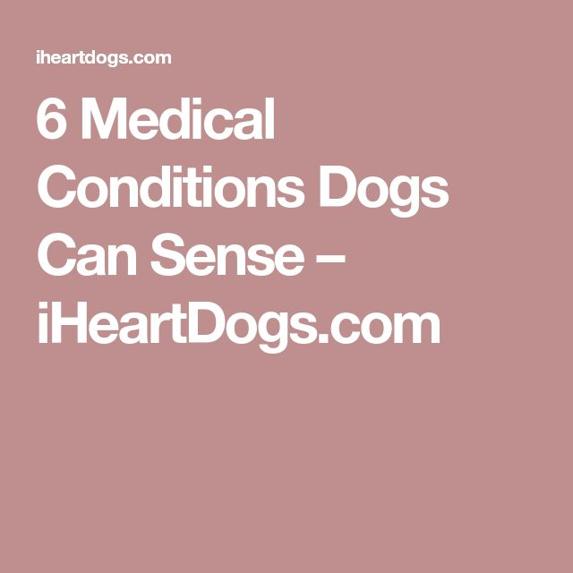 6 Medical Conditions Dogs Can Sense – iHeartDogs.com