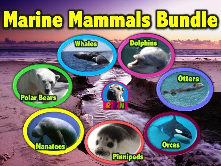 31 best marine mammal unit study images on pinterest. Black Bedroom Furniture Sets. Home Design Ideas