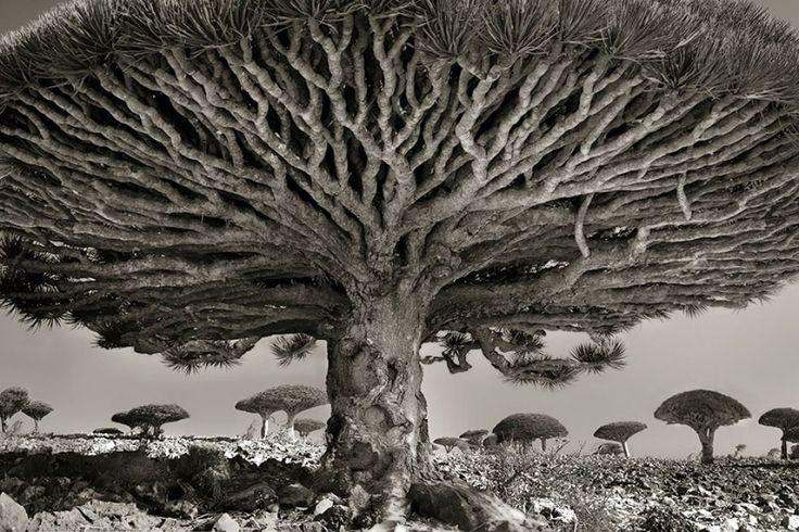 14351-R3L8T8D-1000-ancient-trees-beth-moon-8