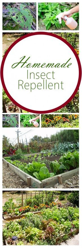 25 best ideas about insect repellent on pinterest - Natural insect repellent for gardens ...