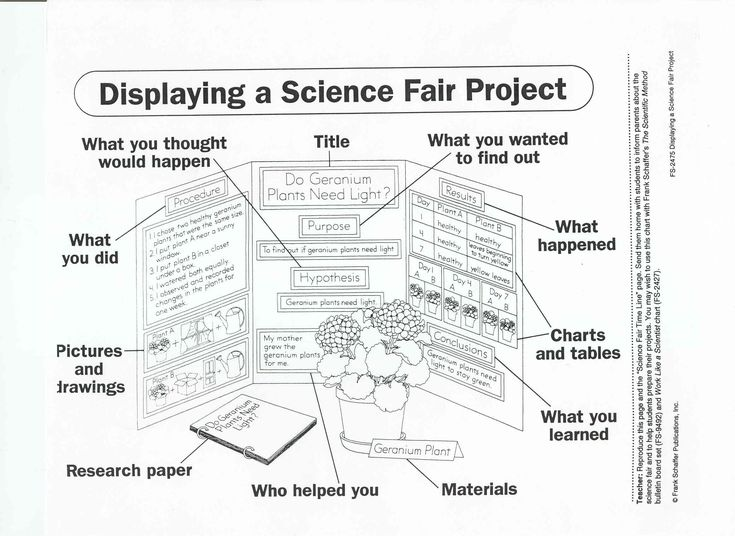 24 Best Science Project Displays Images On Pinterest | School
