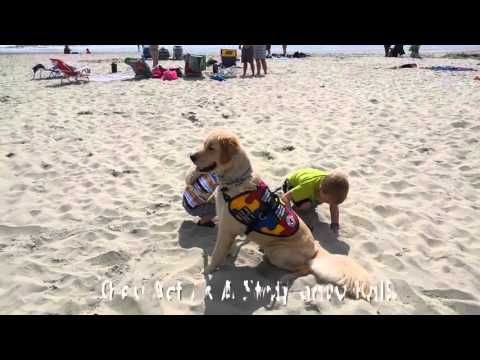 Diabetic Alert Dogs by SDWR Autism Service Dog | Service Dogs by Warren Retrievers