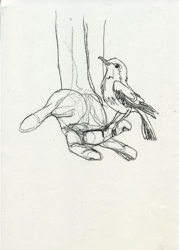 A bird in the hand - Paula McGloin