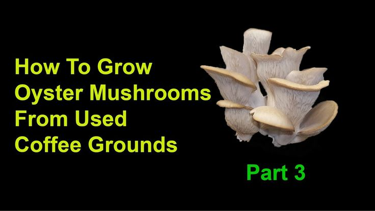 How To Grow Oyster Mushrooms From Used Coffee Grounds - Part 3: Final St...