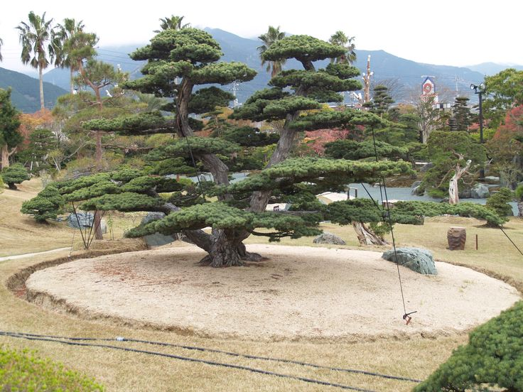 TakasagoAn Bonsai Garden Japan Bonsai Pinterest