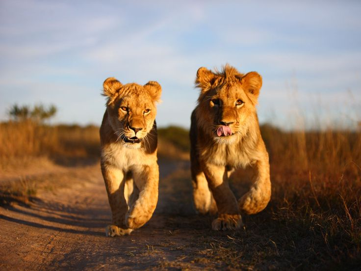 Have the chance to see the native animals in our 2016 trip to Africa!