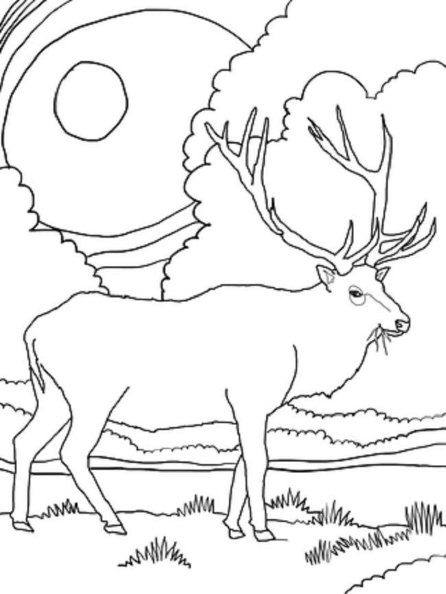 Rocky Mountain Elk Coloring Page From Deers Category Select 24413 Printable Crafts Of Cartoons Nature Animals Bible And Many More