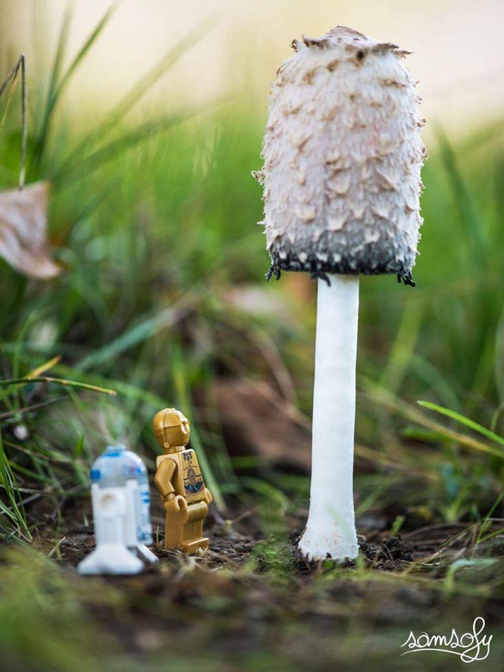 La sérieLegographie du photographe françaisSofiane Samlal, aka Samsofy, qui s'amuse à mettre en scèneses mini-figurines LEGO dans de jolies photograph