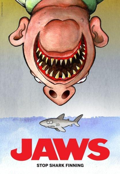 stop shark finning!
