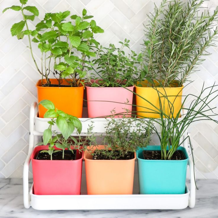 Make a Colorful Indoor Herb Garden A