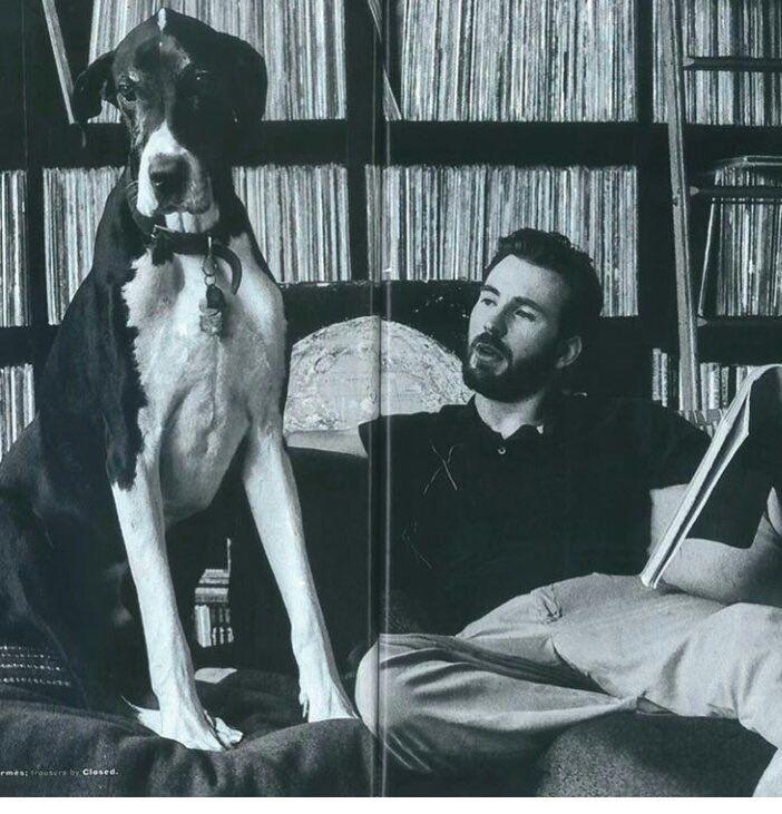 Chris Evans dog is so amazing! I want it! lol ;)
