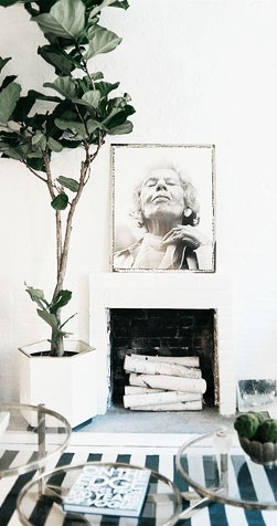 = kitsch indoor Fiddle Fig plant and stripe rug