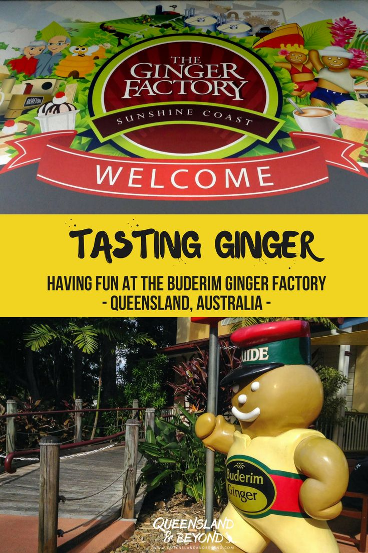 Tasting ginger and finding out more about how ginger is processed at the Buderim Ginger Factory in Yandina, Sunshine Coast, is a whole lot of fun! A fun day out with the kids in #Queensland! 🌐 Queensland & Beyond #SunshineCoast #Australia #GingerFactory