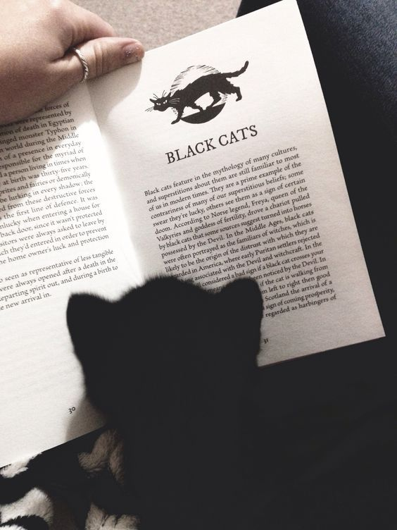 Black cat reading about black cats :)