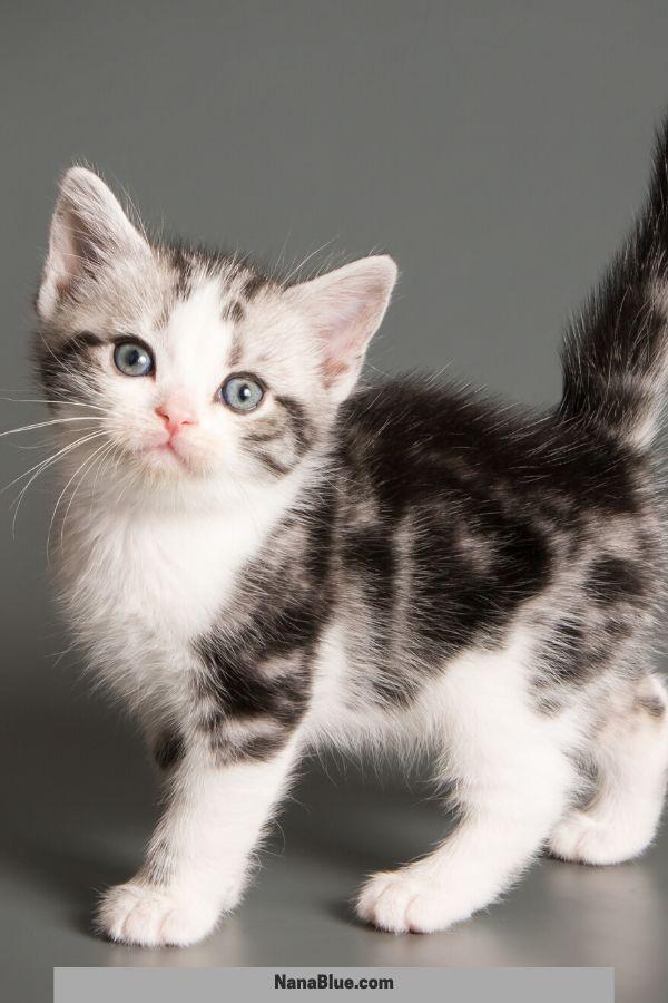 31 Extraordinary Baby Kittens Kittens Cutest Baby Kittens Kitten Breeds