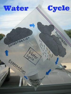 DeSTEMber: Fog, water, rain! Create your own water cycle in a plastic bag and observe the steps of evaporation, condensation and precipitation.
