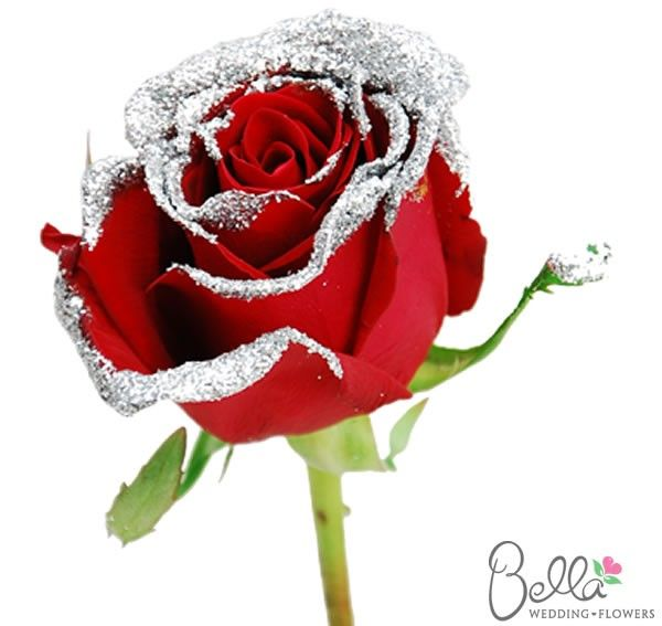 Red Sparkle are a gorgeous variety of red rose and one for its silver sparkle edges. Red Sparkle roses are classic and elegant, and their large, full flower heads make beautifully luxurious wedding bouquets. As always, our Red Sparkle roses are shipped directly from the grower. Take advantage of our Free Shipping with your wholesale rose order!