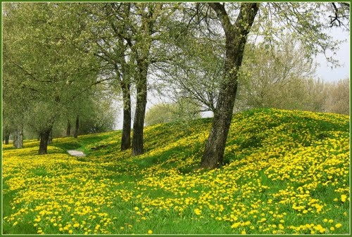 Dandelions in De Aardzee (source: Panoramio)