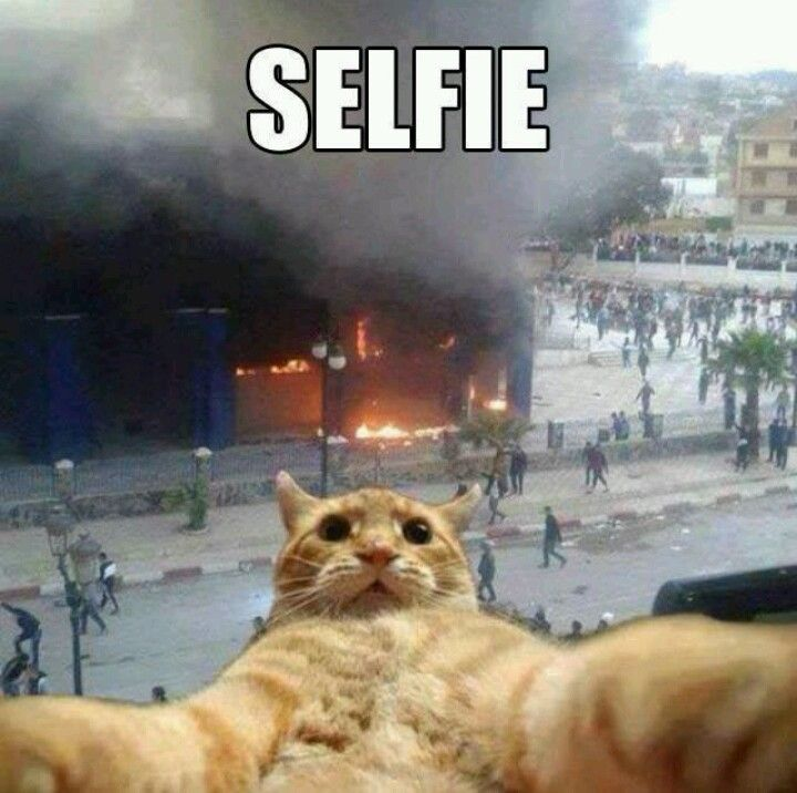 Haha cat taking a selfie with burning building in