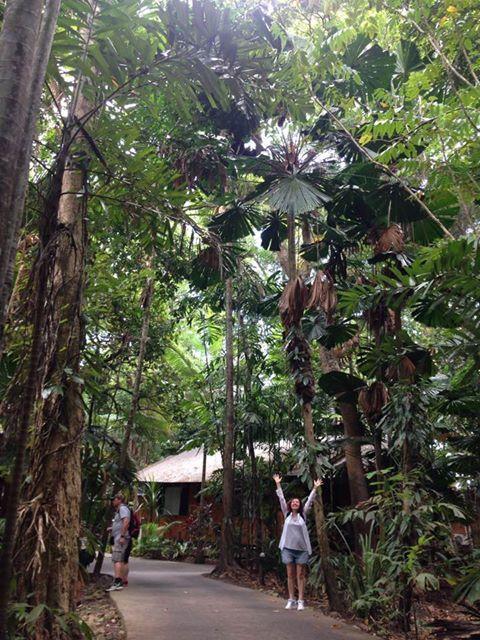 tatyanabinovskatours: Rainforest, Quinsland Australia