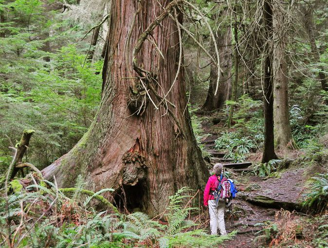 south whidbey state park - hike on whidbey island