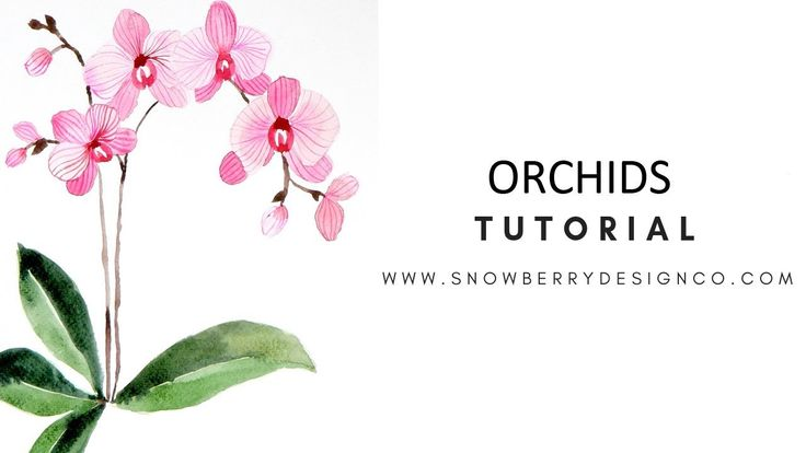 Wie man Aquarell Orchideen malt ANFÄNGER-TUTORIAL von Snowberry Design Co Vide …