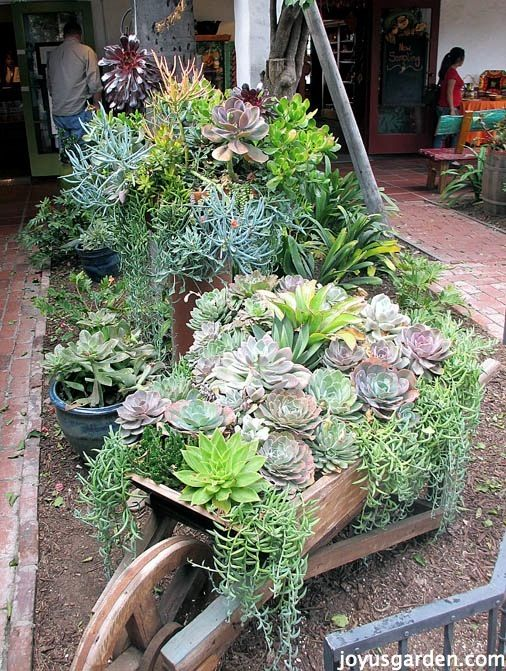 Succulents In Old Town San Diego...'