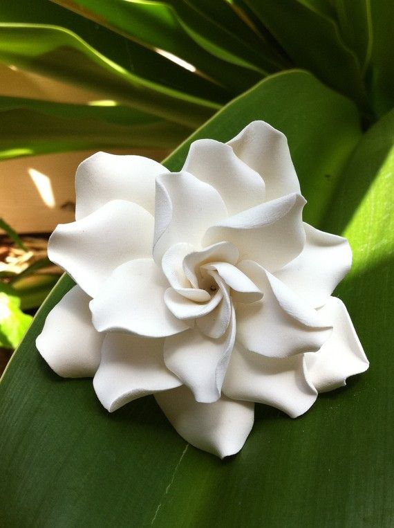Beautiful Hawaii Bride xl Couture Gardenia Hair di HawaiianSandbox