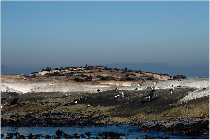 Visit Seal Island, Cape Town