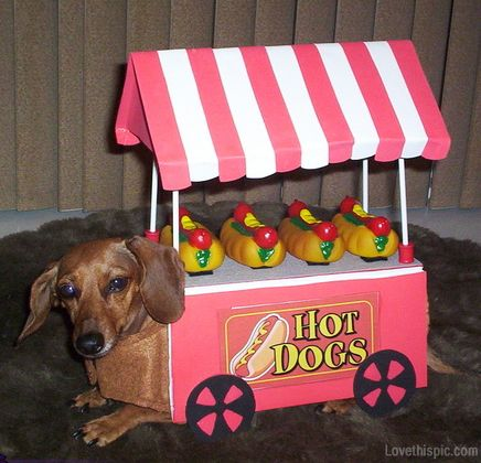 Hot dog vendor costume cute animals halloween crafts diy costumes costume ideas dog costumes pet costume ideas