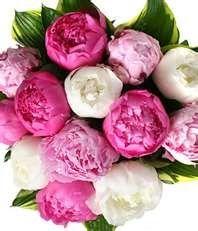 Peonies, Peonies, Peonies!May Wedding Flower, Brown Paper Packages, Colors, Plants, Gardens, White Peonies, Peonies Bouquets, Pink Peonies, Brown Paper Packaging