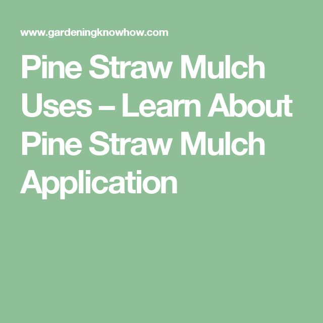 Pine Straw Mulch Uses – Learn About Pine Straw Mulch Application