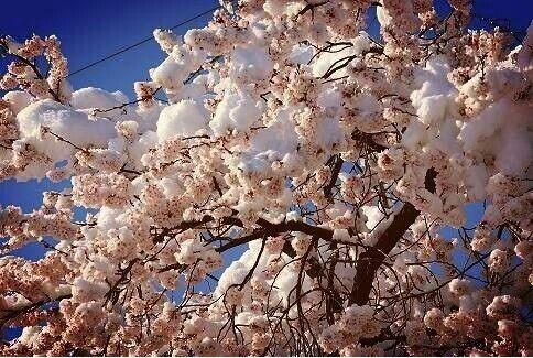 Waktu ke korea...Si Oppa jelasin ttg mount seorak artinya seol itu salju n ak itu gunung besar. Jadi sy tau nama korea saya itu seol mae ....mae nya yah salah satu jenis bunga sakura itu (kok kayak siomayy yaa?😂) ga beda jauh dr nama cina sy sie mei. bunga yg bs idup di musim semi or di salju juga gityuu....bunga liar arrrrrr rrrrr guk guk. Itu mah anjing liar yaaa, macham2 sm sy tak gigit! unch unch gue banget dah.