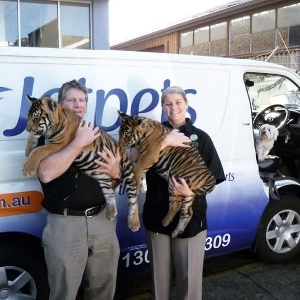In 2012, our team were lucky enough to transport the most adorable Bengal tiger cubs from Dreamworld Australia for a special guest appearance on the Today Show! Take a closer look at the photo of the tigers in front of our Jetpets van, can you see a little furry friend poking his head out from the front seat?