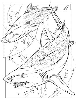 shark coloring pages google search