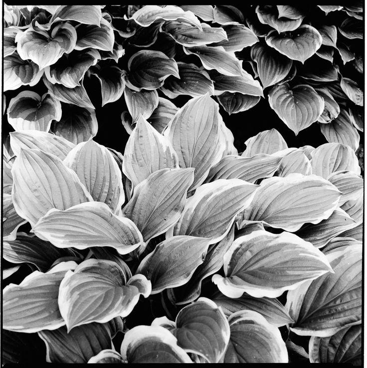 B&W  nature art #mikolajkrawczunas #photography  #art  #personal