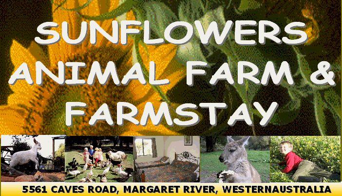 Hand-feeding animals including kangaroos, pony rides, tractor rides