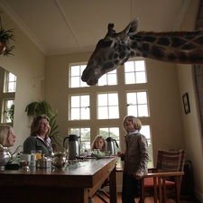 How much fun would it be to have breakfast with a Giraffe?!!!
