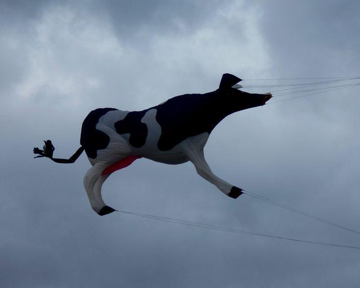 vliegende koe in baarland