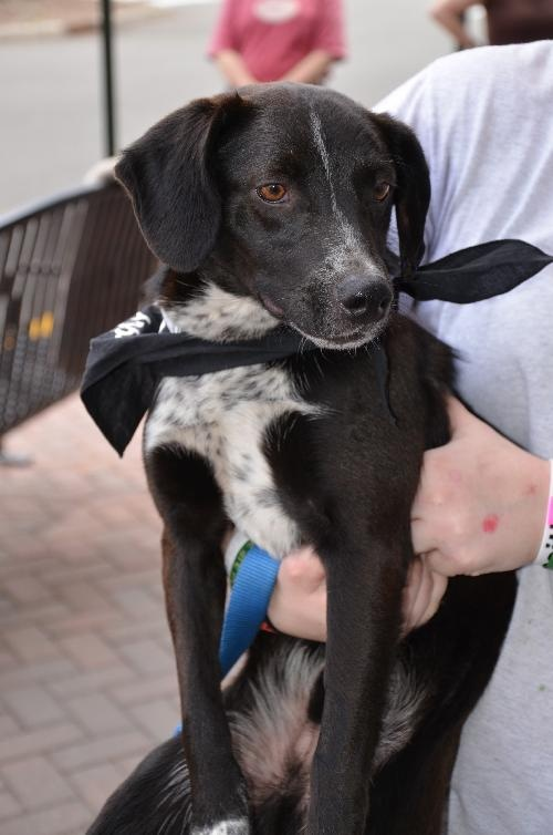 Pin by Kelly on ADOPTFOSTER, THEY COULD USE A GOOD HOME