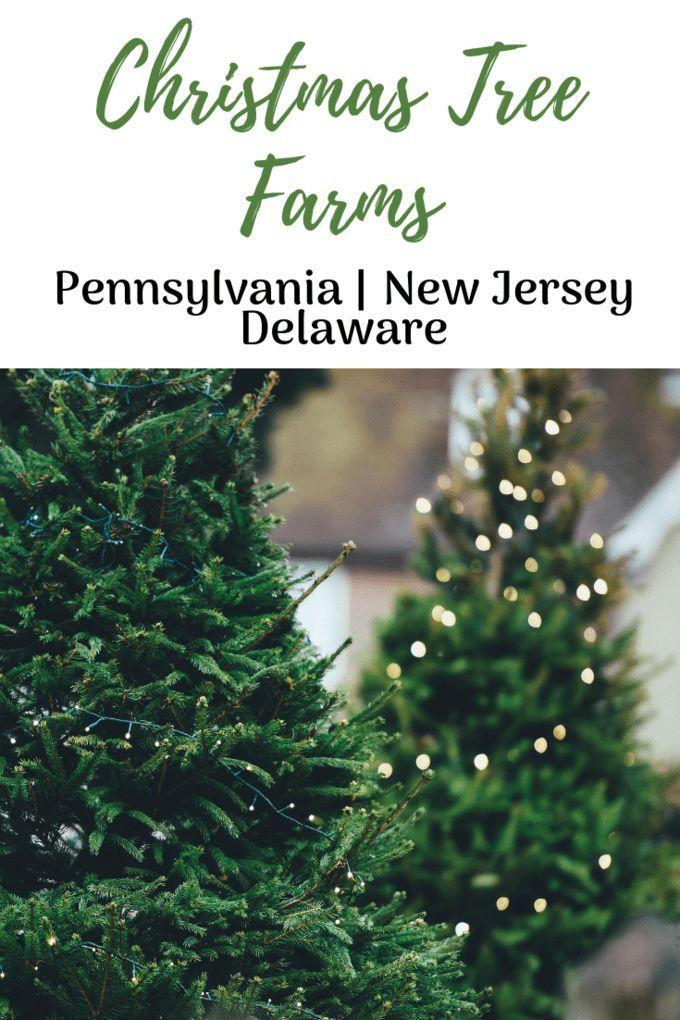 Best Christmas Tree Farms Pennsylvania Nj Delaware Cool Christmas Trees Christmas Tree Farm Tree Farms
