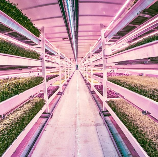 GrowUp Urban Farms are interviewed along with Growing Underground and Aerofarms in the U.S. on the benefits of urban farming.