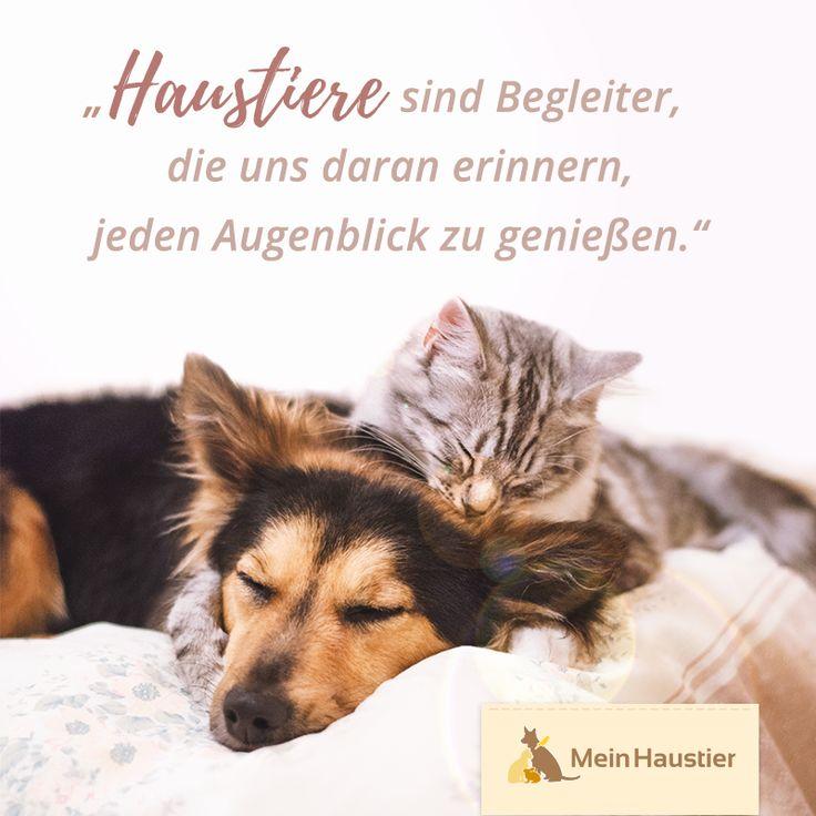 Tiere sind einfach die Besten! #tierliebe #katze #fellknäuel #wahrefreunde – Mein Haustier