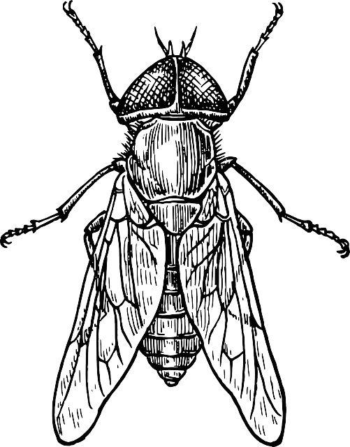 D Line Drawings Jobs : Imagen gratis en pixabay mosca escarabajo insecto