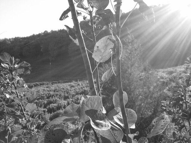 Szikrázó őszi napsütésben...