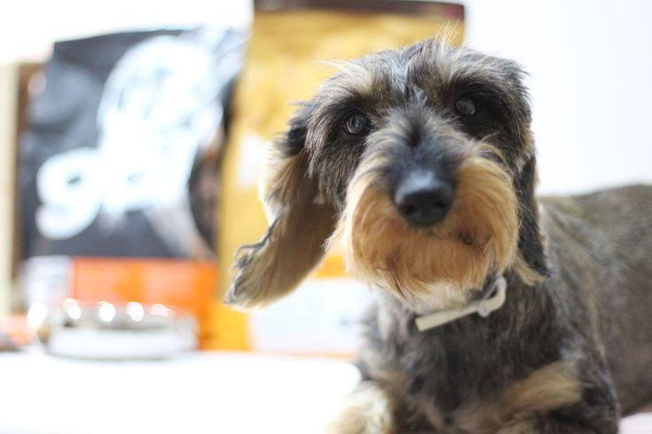 Petcurean, alimento para mascotas