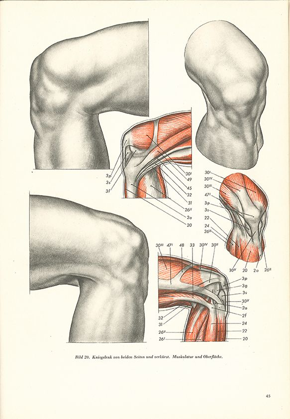 206 best drawing anatomy images on Pinterest | Drawings, Figure ...